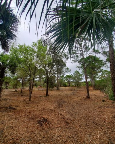 Cleared land after Devine Land Management Land Clearing and Forestry Mulching