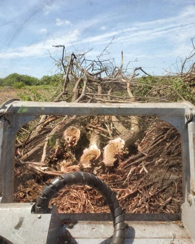 Picture of downed trees before land clearing with skid steer mulcher by Devine Land Management in Mims Florida